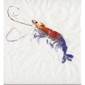 shrimp art